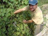 Ernst Junger präsentiert seine paradiesischen Früchte aus biologischer Landwirtschaft