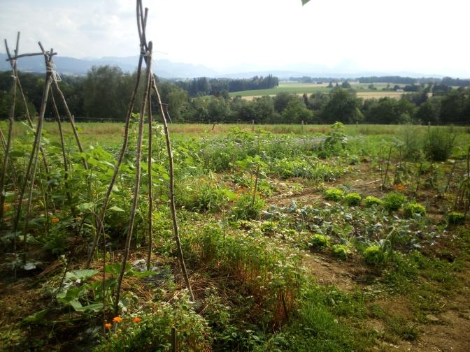 Noch freie Gartenflächen für deinen eigenen Gemüsegarten – (ried im Traunkreis)